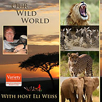 Our Wild World Podcast