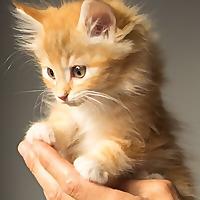 The KittyExpert