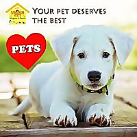 Urban Pet Hospital Blog | Pet News & Articles
