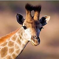 Equatorial Wild Safaris