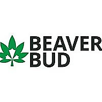 Beaver Bud
