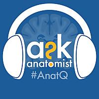 Ask Anatomist