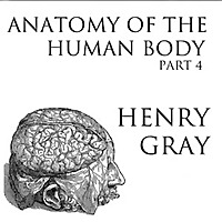 Anatomy of the Human Body, Part 4 by Henry Gray