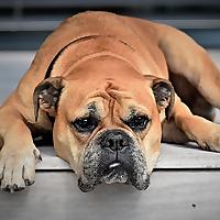 Petshaunt.Com | Hub Of Pets Review
