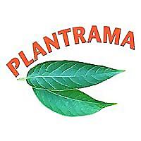 Plantrama - plants, landscapes, & bringing nature indoors