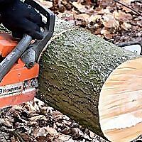 Panorama Tree Care - Blog