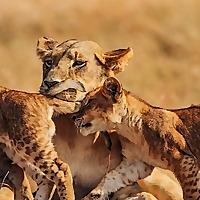 JK Wild Images