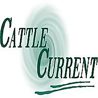 Cattle Current Market Update with Wes Ishmael