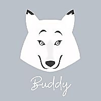 Buddy The White Border Collie