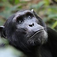 Gorilla Walking Safaris