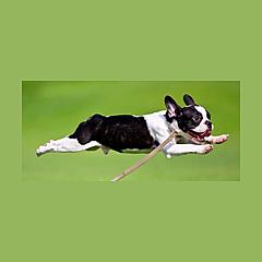 Best Buddy Dog Products LLC