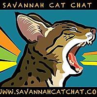 Savannah Cat Chat | The Place for Savannah Cat Talk