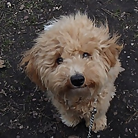The Dog Blog | Have Dog Can Travel | Pet Friendly Locations UK