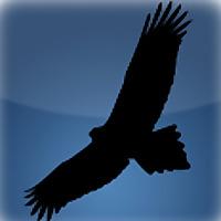 Feathers and Photos | Australia's birding and bird photography forum