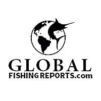 Global Fishing Reports