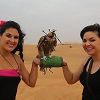 Desert Safari Tours Blog