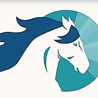 Understanding Equines