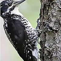 BirdFeeder Tips