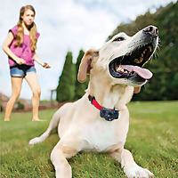 Pet Care Stores | Pet News And Articles