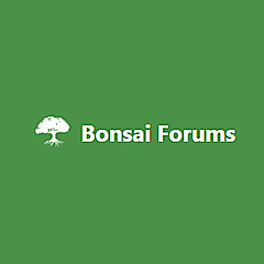 Bonsai Forums