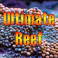 Ultimate Reef