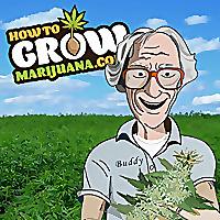 How to Grow Marijuana Forum