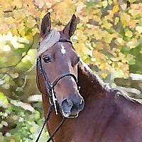 The Flaxen Filly