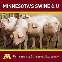 Minnesota's Swine & U