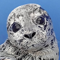 Marine Mammal Rescue Stories