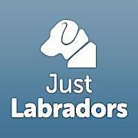 Just Labradors