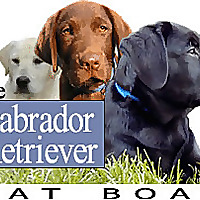 Labrador Retriever Chat Forums