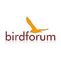 BirdForum » Nikon