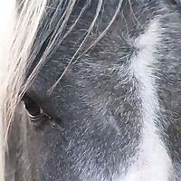 Canham Farm Horse Rescue