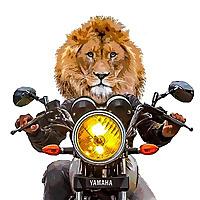 Lions Detour
