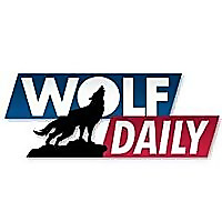 Wolf Daily