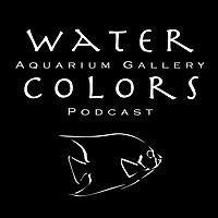 Water Colors Aquarium Gallery