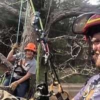 Canopy Insider with Almon and Carolina from Beast Coast Tree Climbers