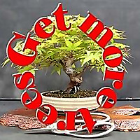 Reddit » Bonsai