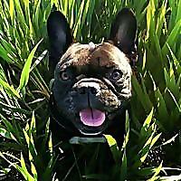 ProBulldog