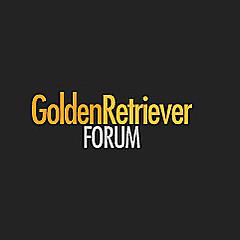 Golden Retriever Dog Forums