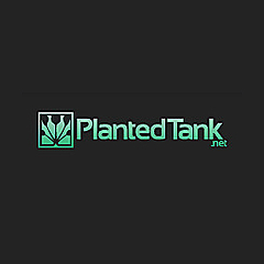 Planted Tank Forum » Aquascaping