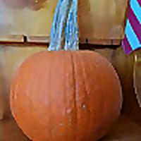 Salty Pumpkin Studio