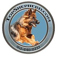 Top Shepherd Kennel Blog