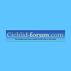 Cichlid-Forum