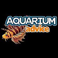 Aquarium Advice » Cichlid Discussion
