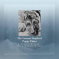 The German Shepherd Puppy Palace Blog