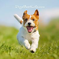 Dog's Best Life
