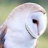 Another Bird Blog