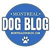 Montreal Dog Blog