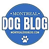 Montreal Dog Blog